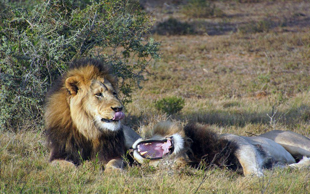 17 daagse motorreis in Zuid-Afrika door Die Hel en Baviaanskloof. Travel 2 Explore motorreizen
