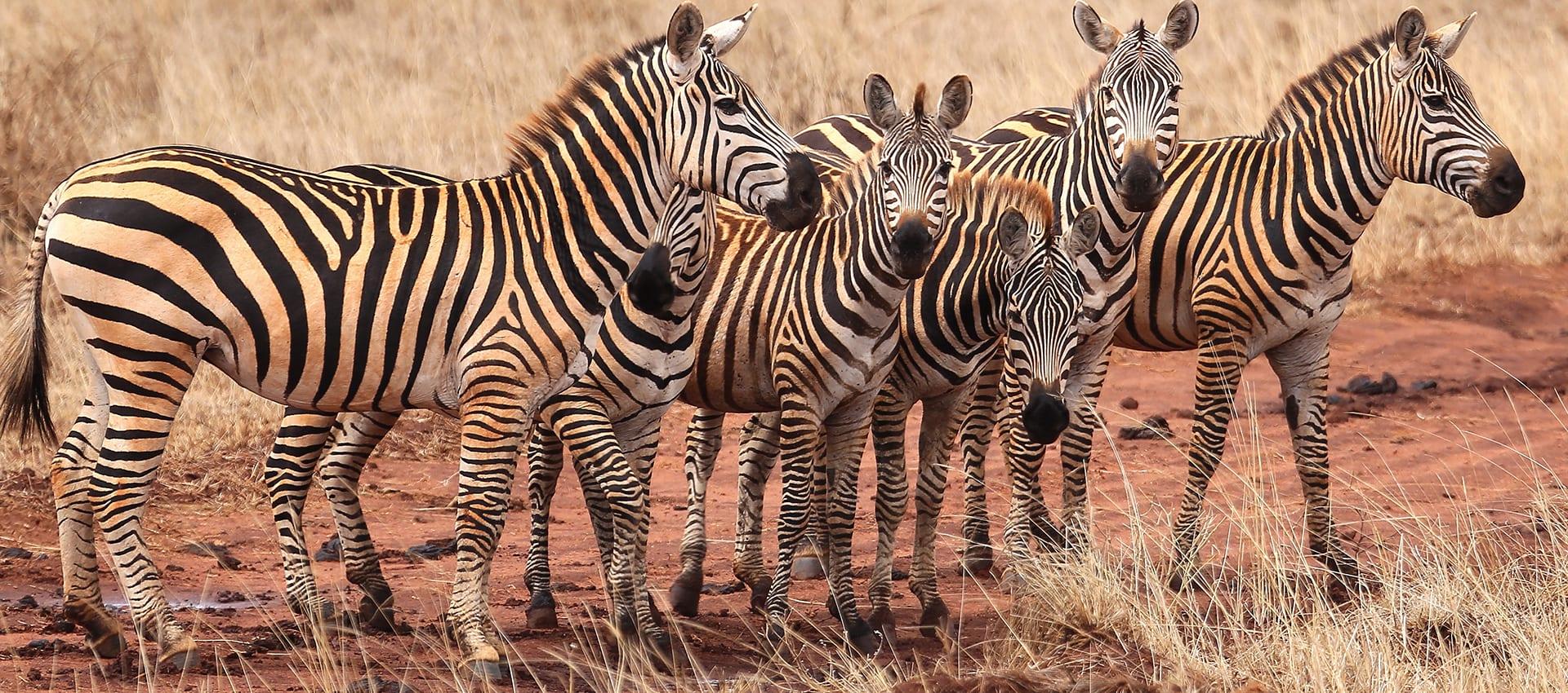 Motorreis Kenia Tanzania van Travel 2 Explore Motorreizen
