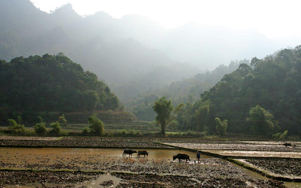 Prachtige landschappen komen voorbij tijdens onze rondreis per motor door Vietnam