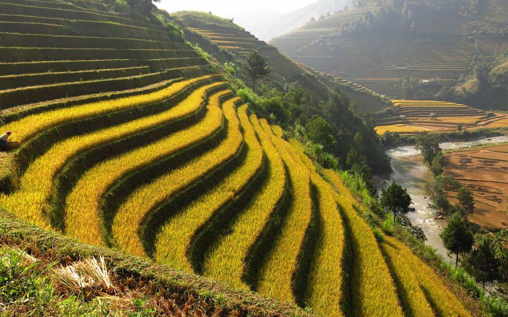 Rijstterrassen tijdens de motorreis door Noord-Vietnam met Travel2Explore
