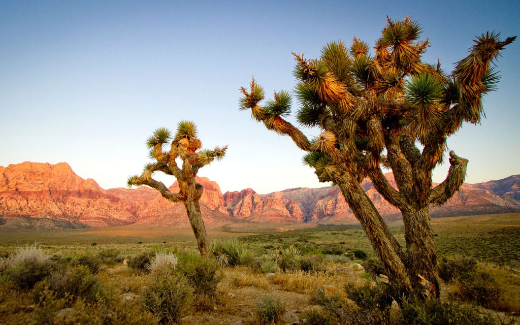 Amerika Motorreis Far West door California en diverse Nationale parken zoals Joshua Tree NP