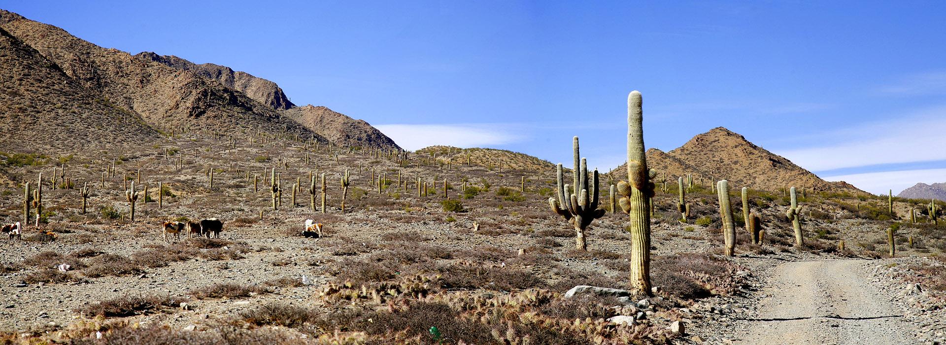Motorreizen Zuid-Amerika door Chili, Argentine, Peru en Bolivia, expeditie Uturuncu van Travel 2 Explore motorreizen
