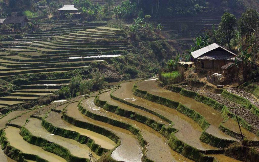 Rijstvelden in Vietnam tijdens de motorreis Vietnam met Travel2Explore