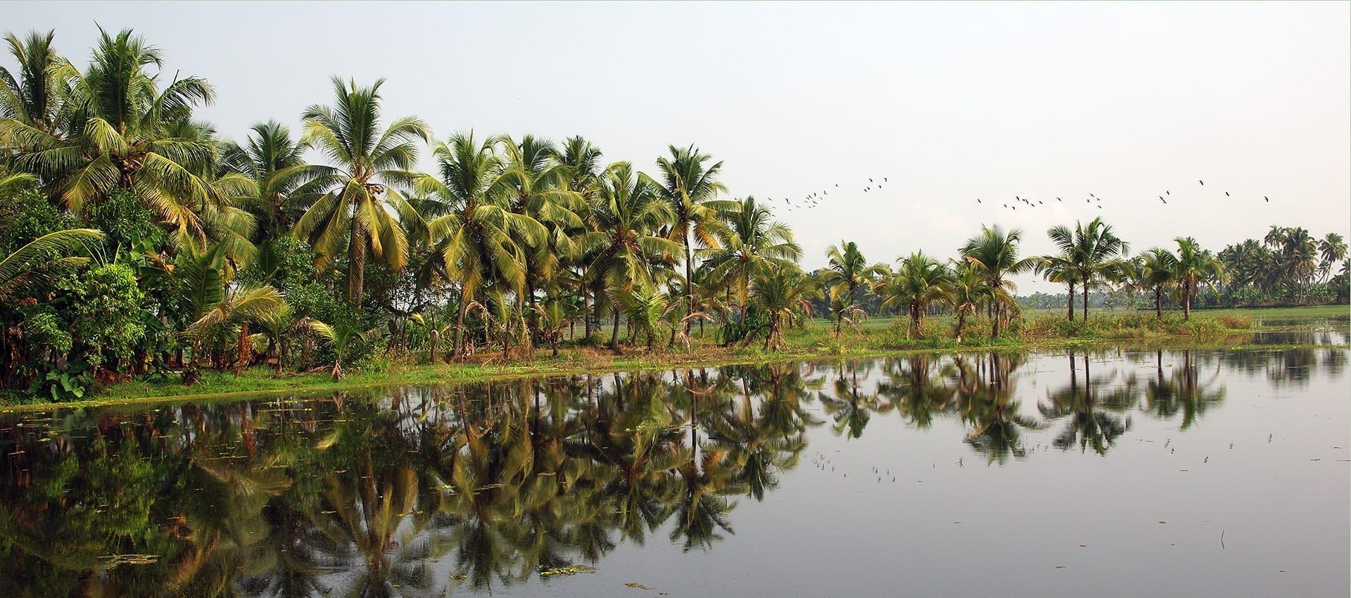 Ga mee en ontdek de backwaters, Cochin, Goa en tijgerreservaten in Zuid India